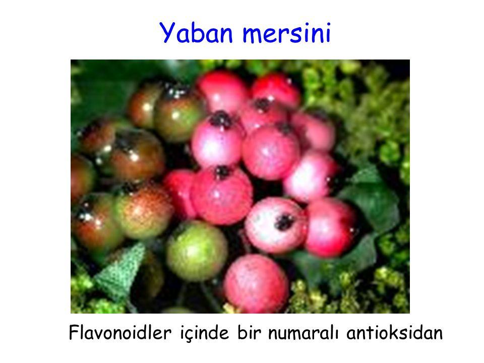 Flavonoidler içinde bir numaralı antioksidan