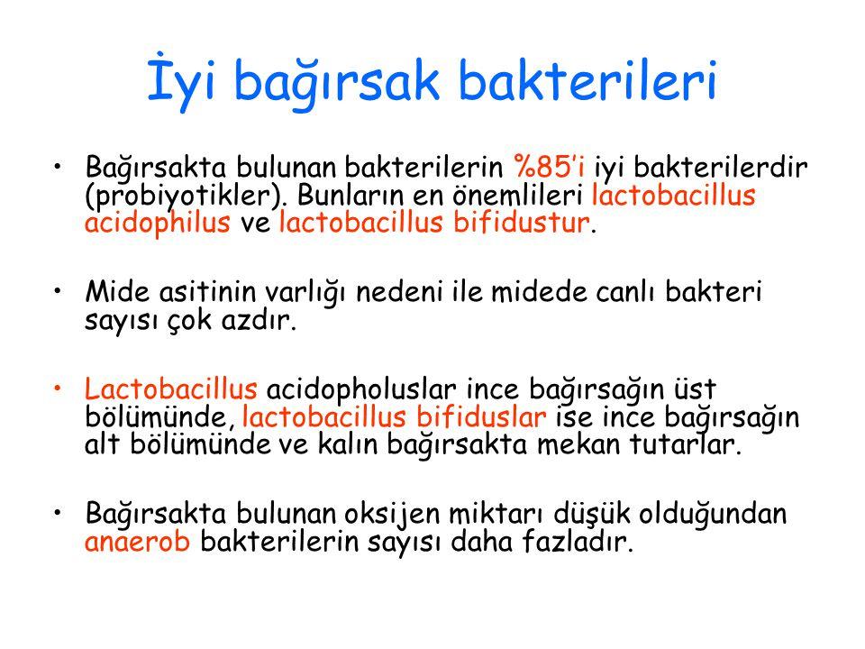 İyi bağırsak bakterileri