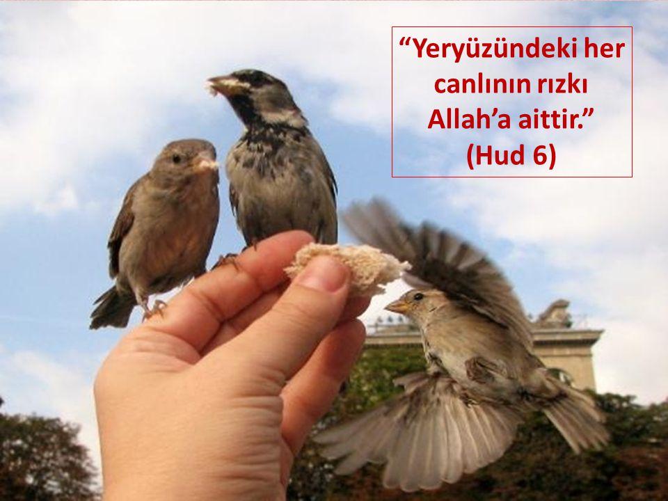 Yeryüzündeki her canlının rızkı Allah'a aittir.