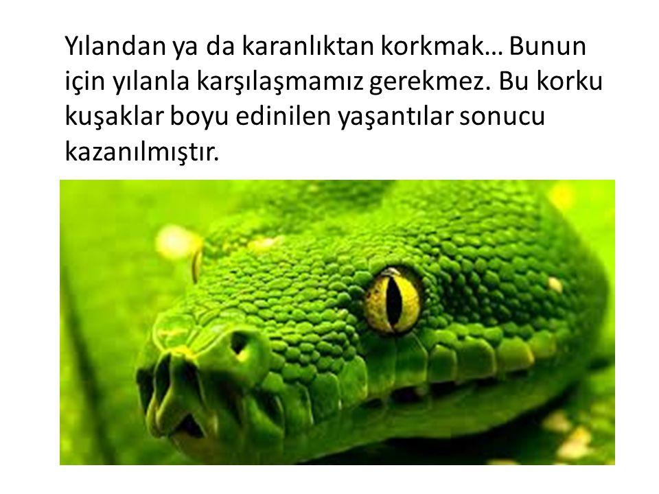 Yılandan ya da karanlıktan korkmak… Bunun için yılanla karşılaşmamız gerekmez.