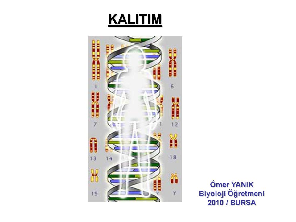KALITIM Ömer YANIK Biyoloji Öğretmeni 2010 / BURSA