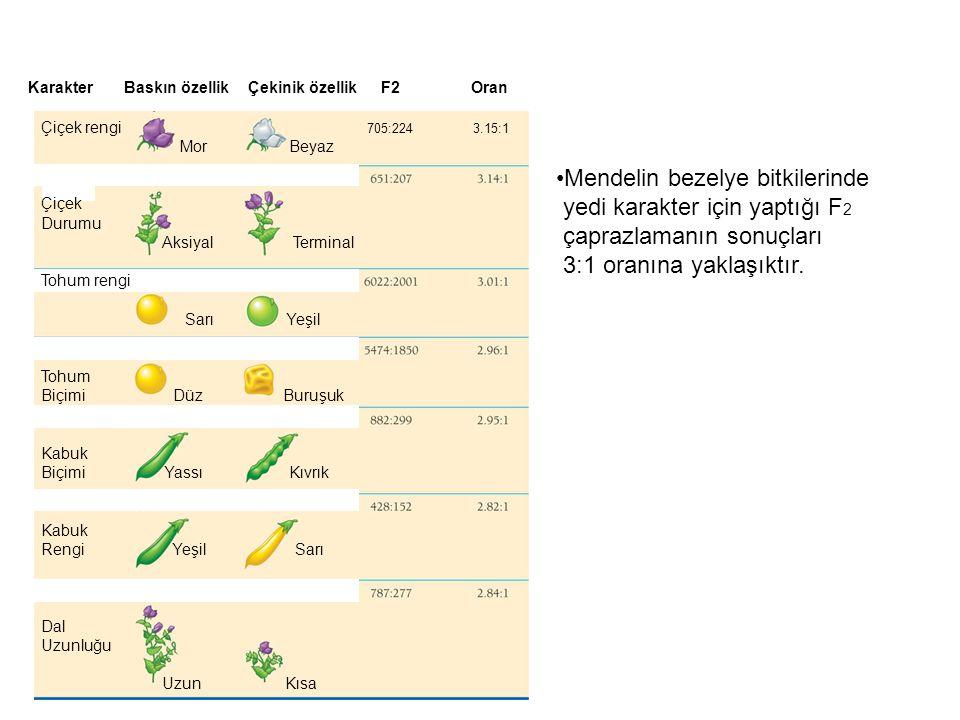 Mendelin bezelye bitkilerinde yedi karakter için yaptığı F2