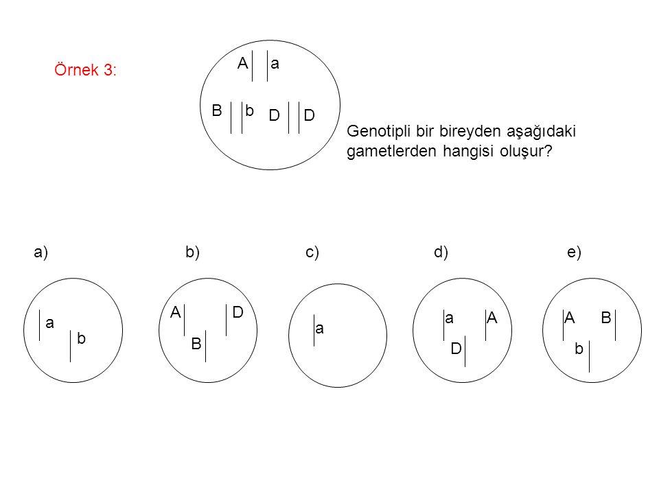 A a Örnek 3: B b. D D. Genotipli bir bireyden aşağıdaki. gametlerden hangisi oluşur