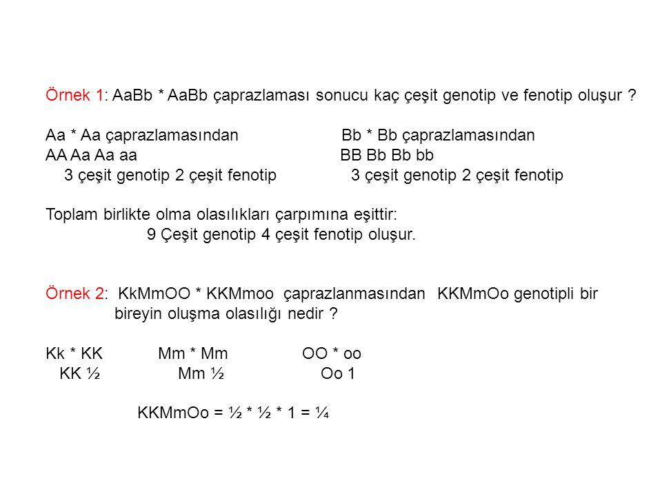 Örnek 1: AaBb * AaBb çaprazlaması sonucu kaç çeşit genotip ve fenotip oluşur