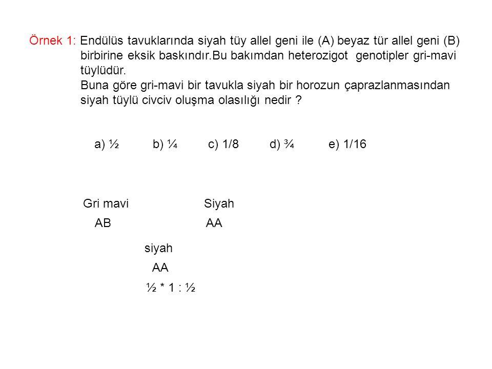 Örnek 1: Endülüs tavuklarında siyah tüy allel geni ile (A) beyaz tür allel geni (B)