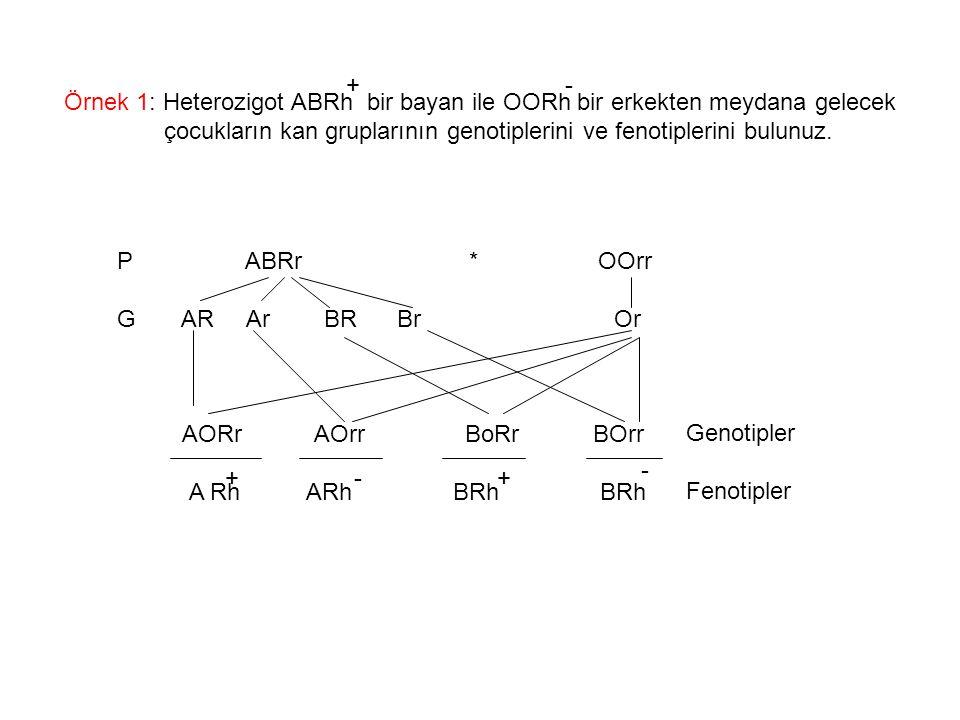 + - Örnek 1: Heterozigot ABRh bir bayan ile OORh bir erkekten meydana gelecek. çocukların kan gruplarının genotiplerini ve fenotiplerini bulunuz.