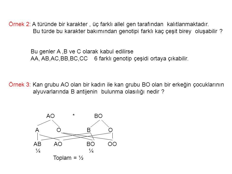 Örnek 2: A türünde bir karakter , üç farklı allel gen tarafından kalıtlanmaktadır.