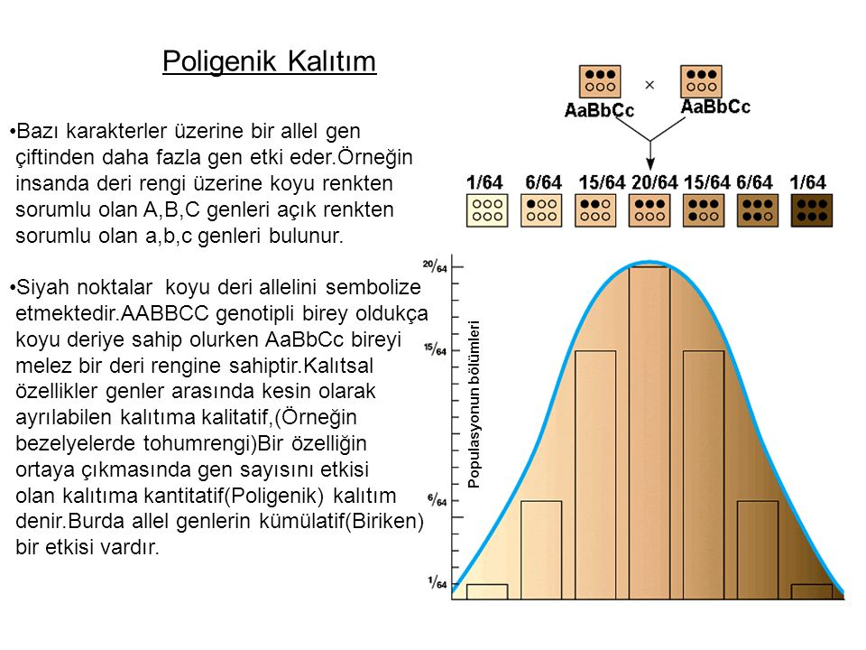 Poligenik Kalıtım Bazı karakterler üzerine bir allel gen