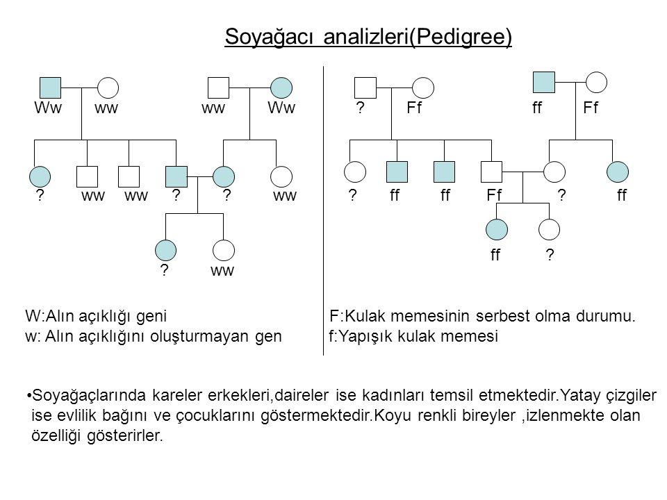 Soyağacı analizleri(Pedigree)