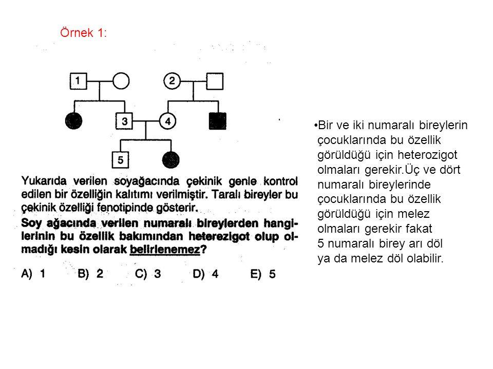 Örnek 1: Bir ve iki numaralı bireylerin. çocuklarında bu özellik. görüldüğü için heterozigot. olmaları gerekir.Üç ve dört.