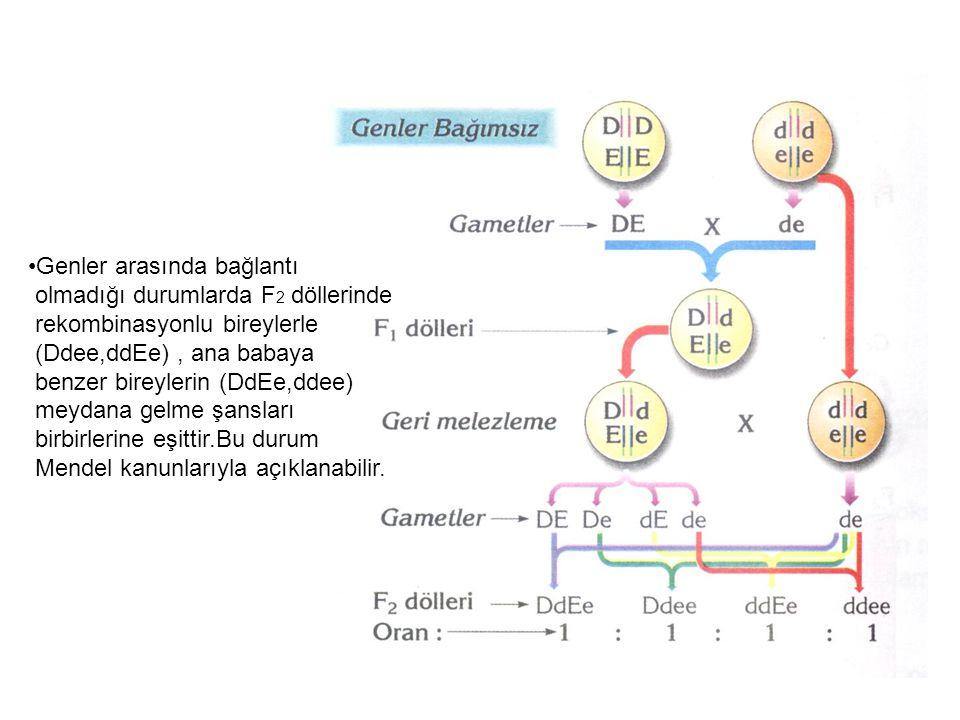 Genler arasında bağlantı