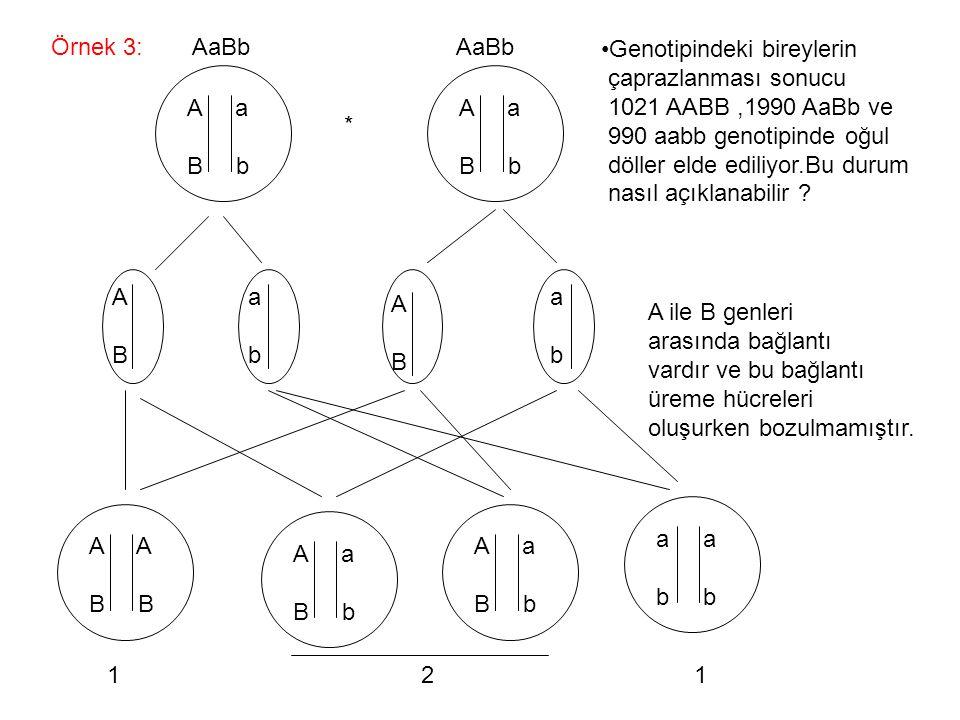 Örnek 3: AaBb AaBb. Genotipindeki bireylerin. çaprazlanması sonucu.
