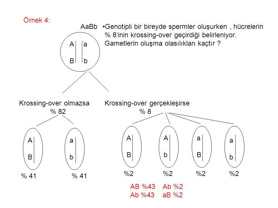 Örnek 4: AaBb. Genotipli bir bireyde spermler oluşurken , hücrelerin. % 8'inin krossing-over geçirdiği belirleniyor.
