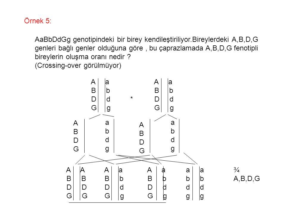Örnek 5: AaBbDdGg genotipindeki bir birey kendileştiriliyor.Bireylerdeki A,B,D,G.