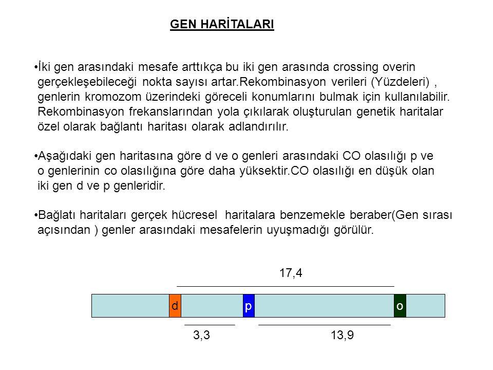 GEN HARİTALARI İki gen arasındaki mesafe arttıkça bu iki gen arasında crossing overin.