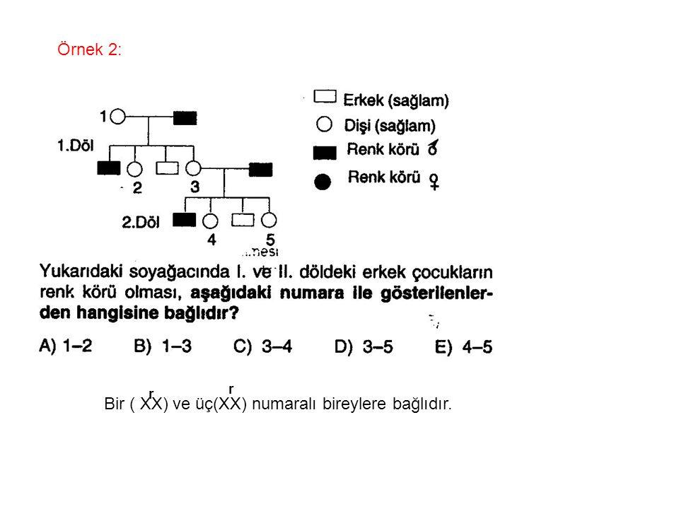 Bir ( XX) ve üç(XX) numaralı bireylere bağlıdır.