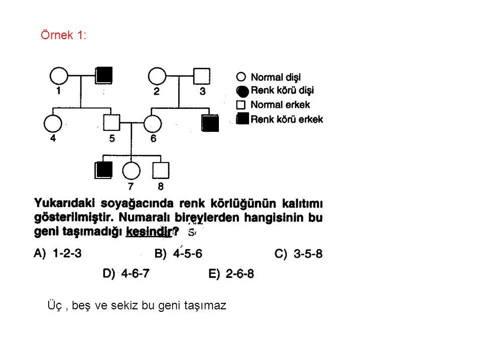 Örnek 1: Üç , beş ve sekiz bu geni taşımaz