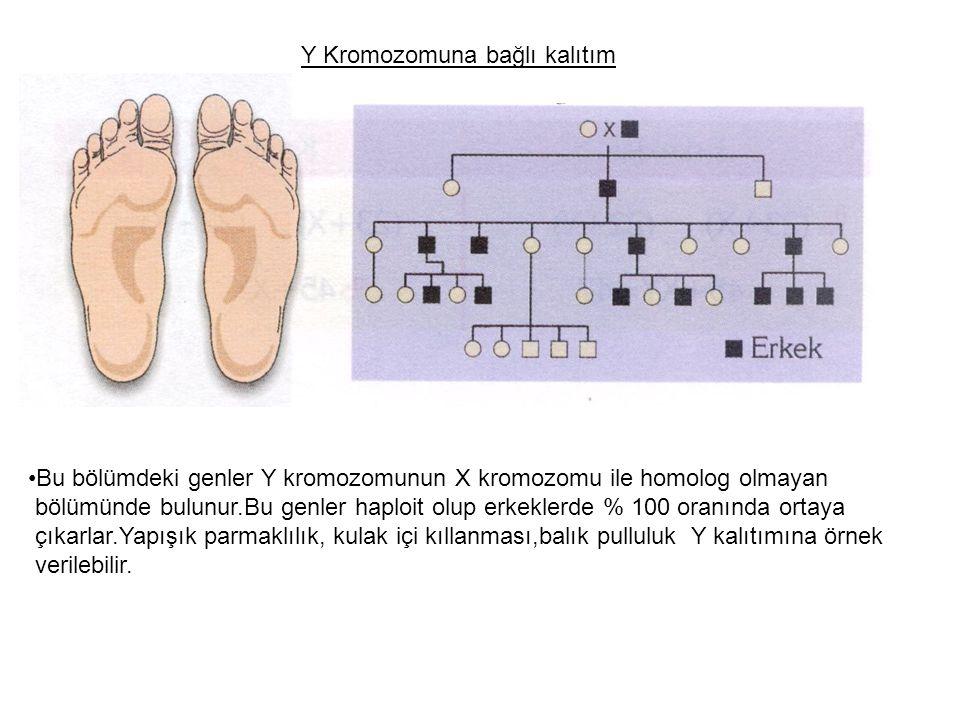 Y Kromozomuna bağlı kalıtım