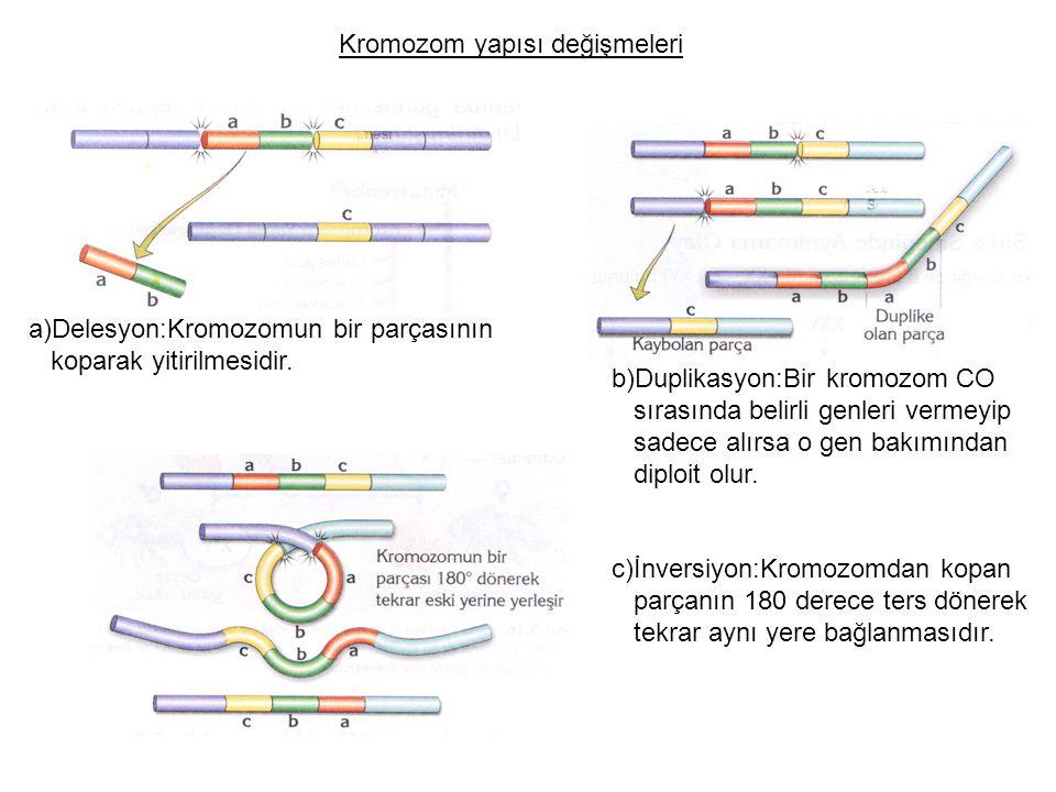 Kromozom yapısı değişmeleri