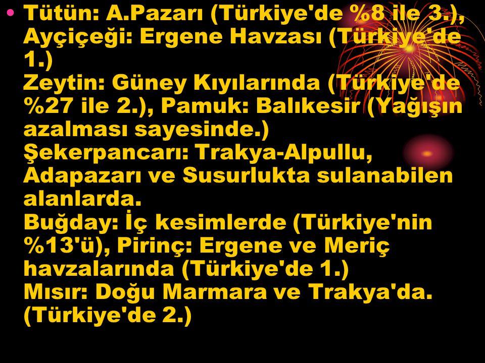 Tütün: A. Pazarı (Türkiye de %8 ile 3