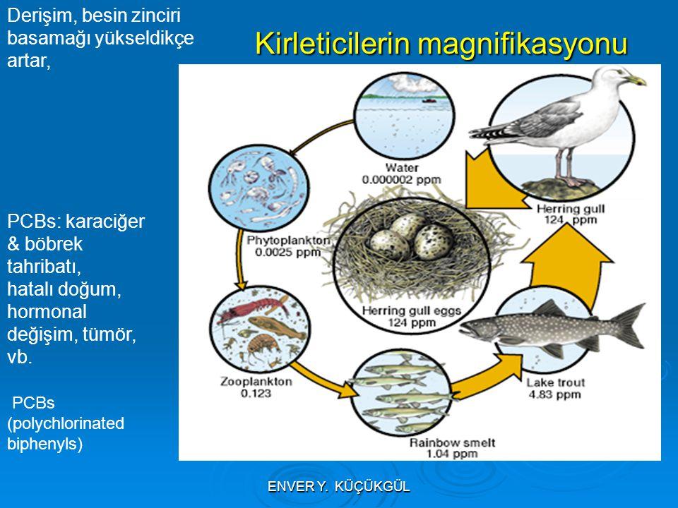 Kirleticilerin magnifikasyonu