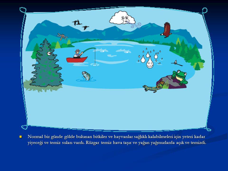 Normal bir günde gölde bulunan bitkiler ve hayvanlar sağlıklı kalabilmeleri için yeteri kadar yiyeceği ve temiz suları vardı.