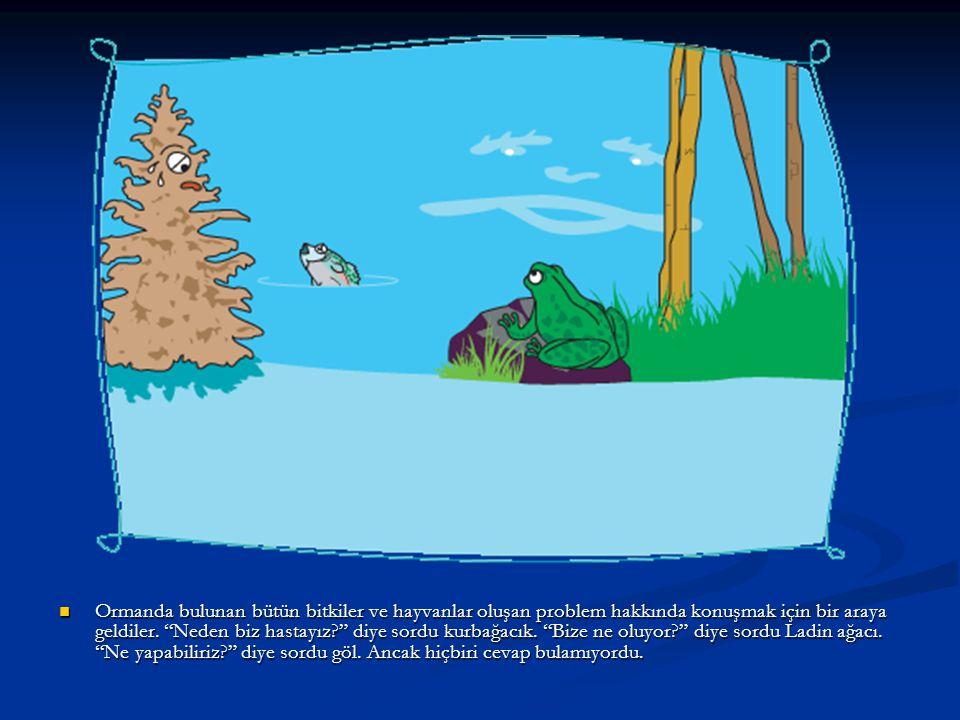Ormanda bulunan bütün bitkiler ve hayvanlar oluşan problem hakkında konuşmak için bir araya geldiler.