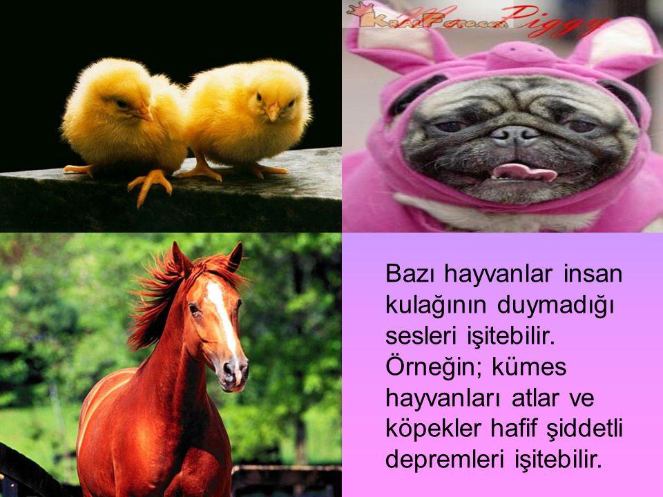 Bazı hayvanlar insan kulağının duymadığı sesleri işitebilir
