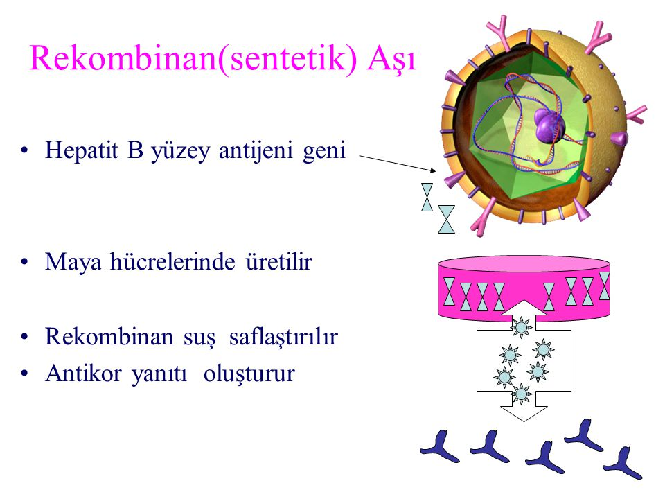 Rekombinan(sentetik) Aşı