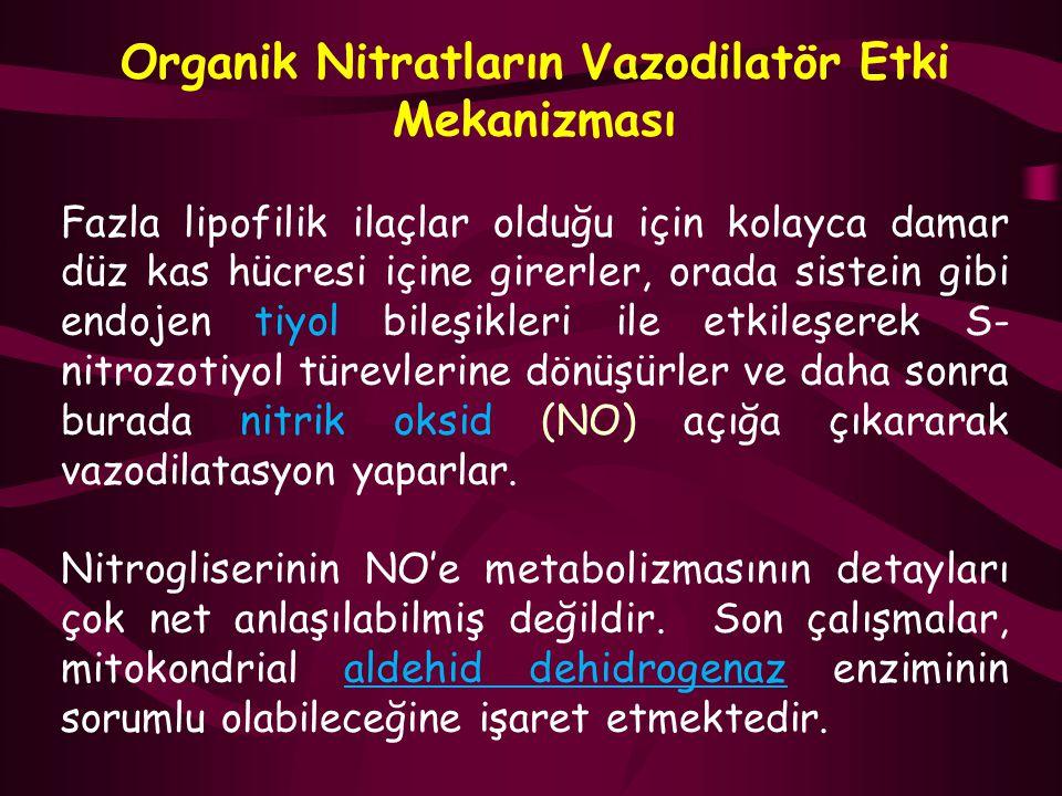 Organik Nitratların Vazodilatör Etki Mekanizması