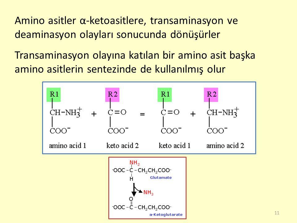 Amino asitler α-ketoasitlere, transaminasyon ve deaminasyon olayları sonucunda dönüşürler