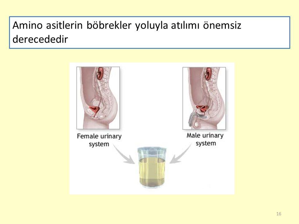 Amino asitlerin böbrekler yoluyla atılımı önemsiz derecededir