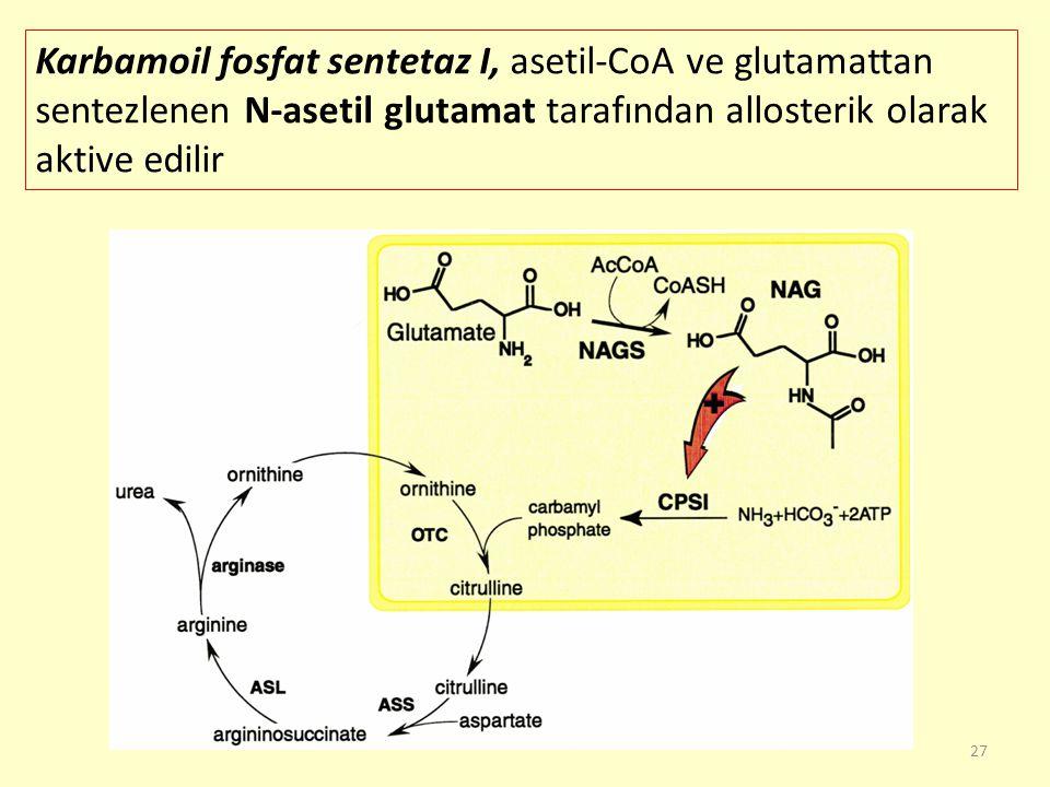 Karbamoil fosfat sentetaz I, asetil-CoA ve glutamattan sentezlenen N-asetil glutamat tarafından allosterik olarak aktive edilir