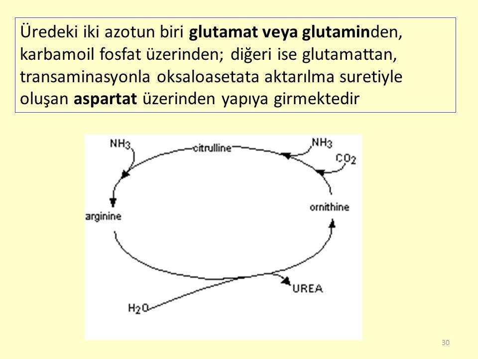 Üredeki iki azotun biri glutamat veya glutaminden, karbamoil fosfat üzerinden; diğeri ise glutamattan, transaminasyonla oksaloasetata aktarılma suretiyle oluşan aspartat üzerinden yapıya girmektedir