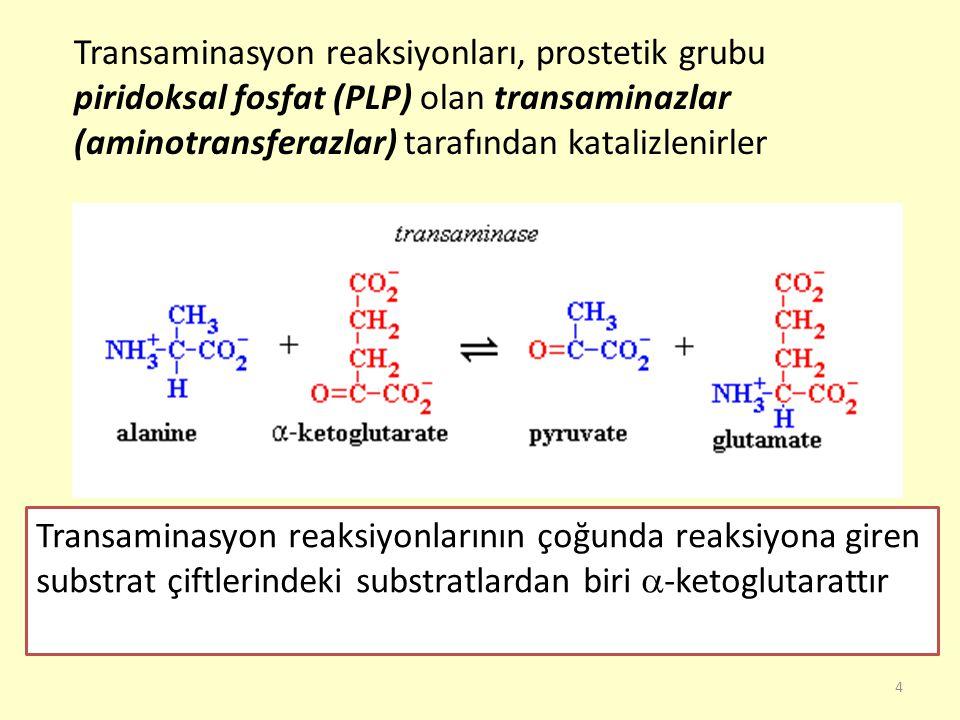 Transaminasyon reaksiyonları, prostetik grubu piridoksal fosfat (PLP) olan transaminazlar (aminotransferazlar) tarafından katalizlenirler