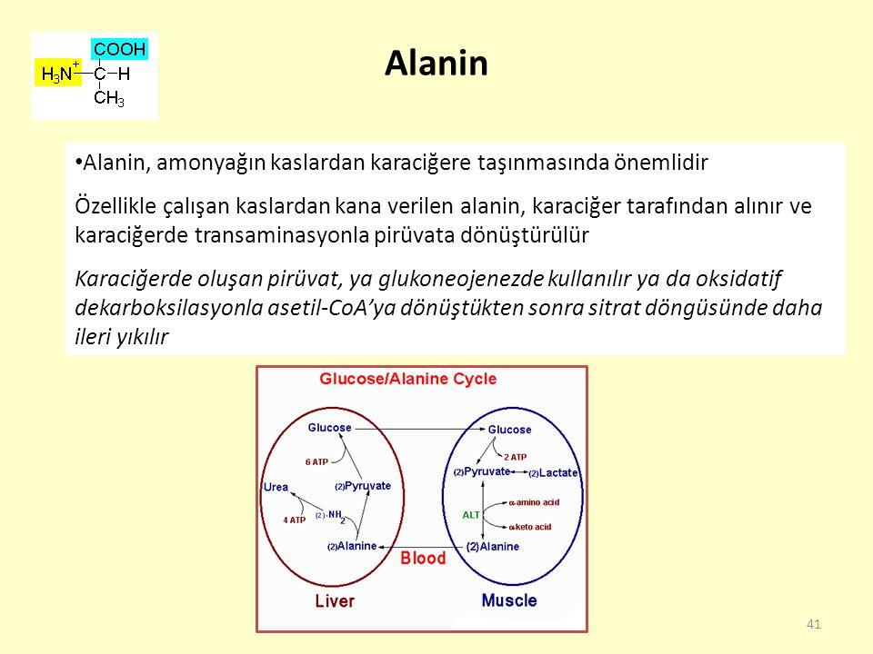 Alanin Alanin, amonyağın kaslardan karaciğere taşınmasında önemlidir