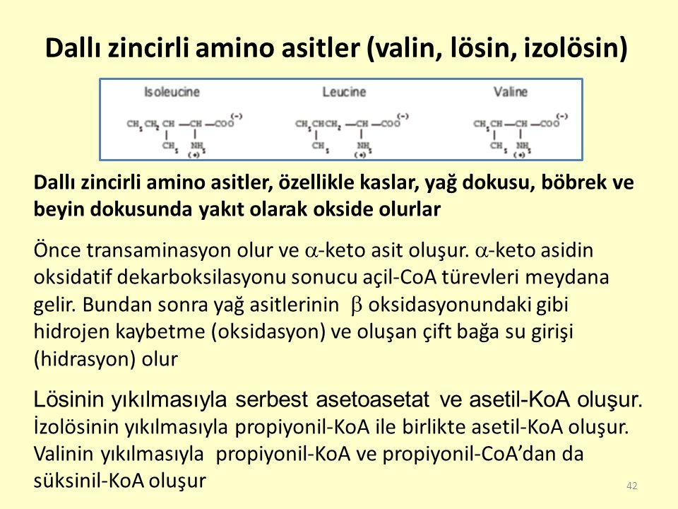 Dallı zincirli amino asitler (valin, lösin, izolösin)