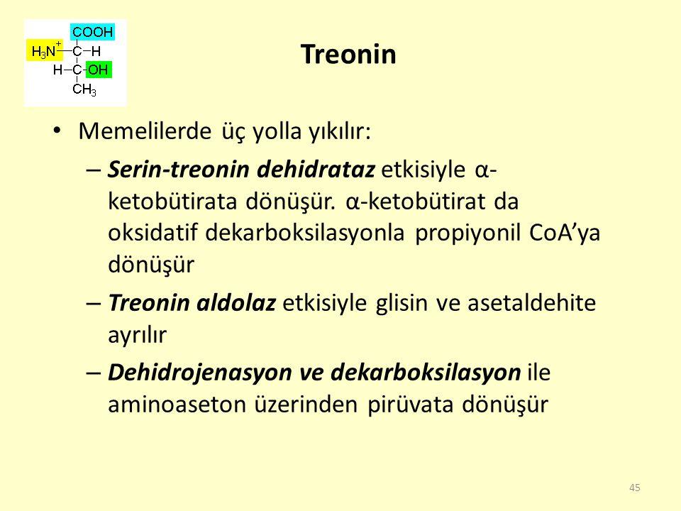 Treonin Memelilerde üç yolla yıkılır: