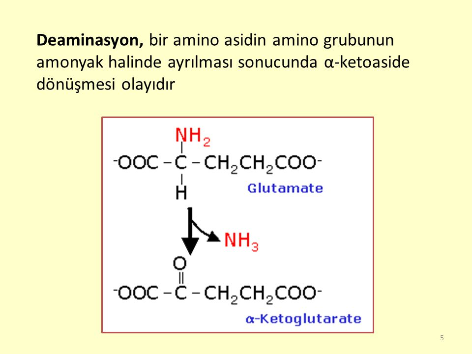 Deaminasyon, bir amino asidin amino grubunun amonyak halinde ayrılması sonucunda α-ketoaside dönüşmesi olayıdır