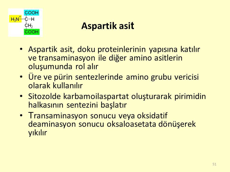 Aspartik asit Aspartik asit, doku proteinlerinin yapısına katılır ve transaminasyon ile diğer amino asitlerin oluşumunda rol alır.
