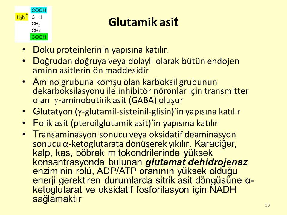 Glutamik asit Doku proteinlerinin yapısına katılır.