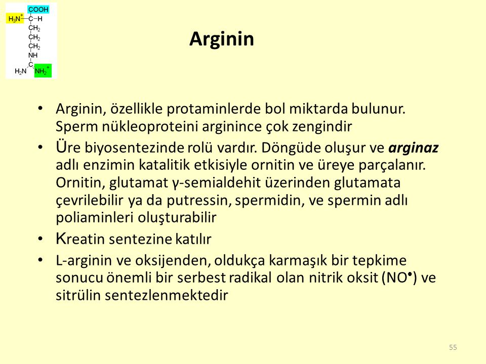 Arginin Arginin, özellikle protaminlerde bol miktarda bulunur. Sperm nükleoproteini arginince çok zengindir.