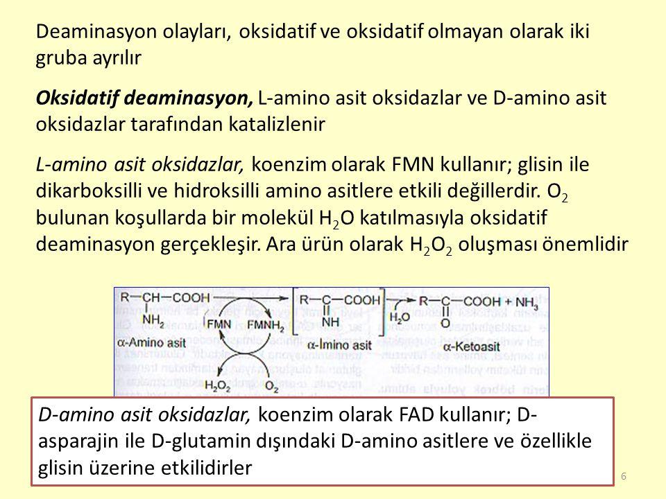 Deaminasyon olayları, oksidatif ve oksidatif olmayan olarak iki gruba ayrılır