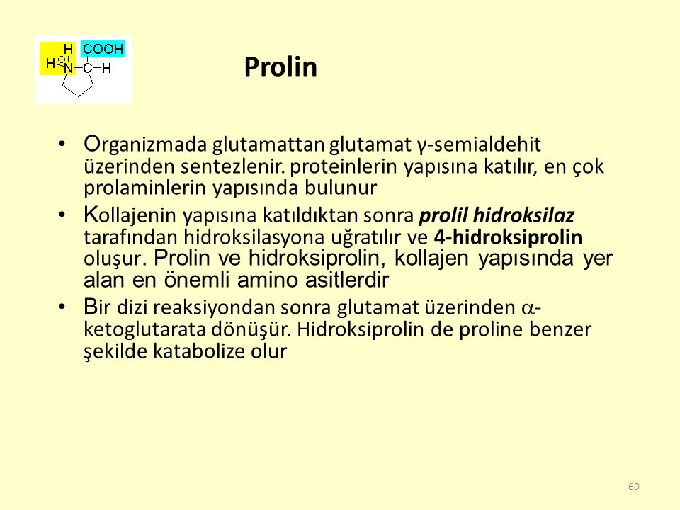 Prolin Organizmada glutamattan glutamat γ-semialdehit üzerinden sentezlenir. proteinlerin yapısına katılır, en çok prolaminlerin yapısında bulunur.