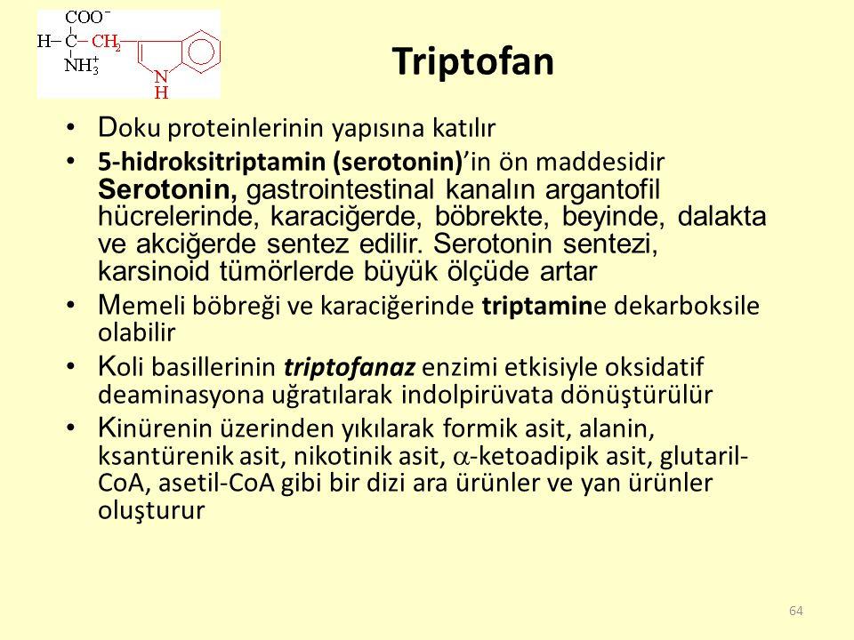 Triptofan Doku proteinlerinin yapısına katılır