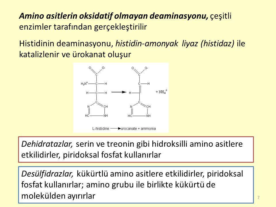 Amino asitlerin oksidatif olmayan deaminasyonu, çeşitli enzimler tarafından gerçekleştirilir