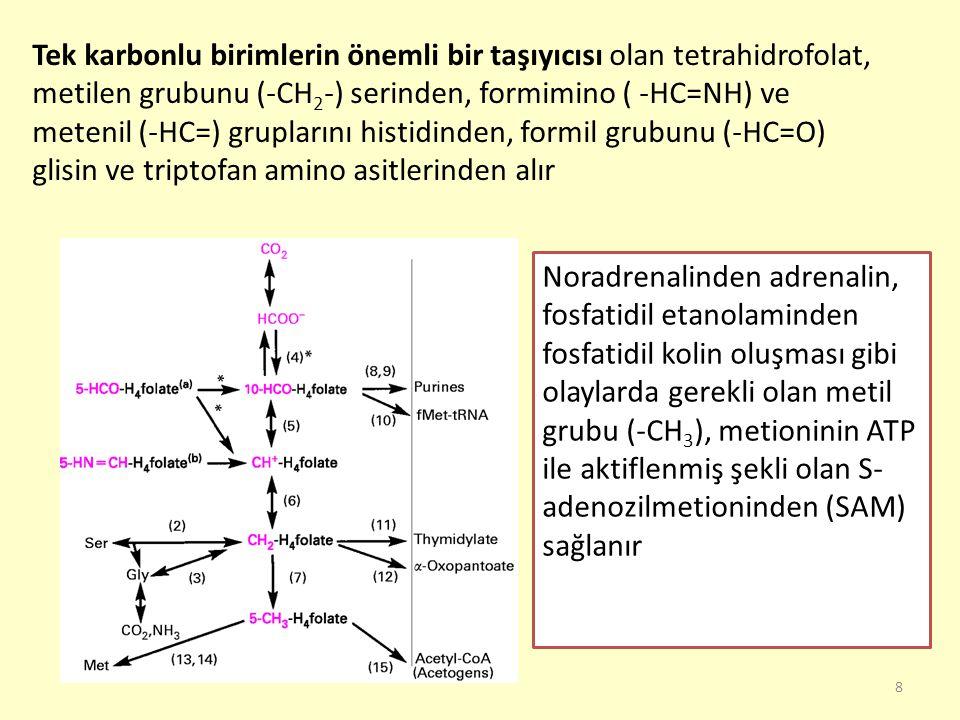 Tek karbonlu birimlerin önemli bir taşıyıcısı olan tetrahidrofolat, metilen grubunu (-CH2-) serinden, formimino ( -HC=NH) ve metenil (-HC=) gruplarını histidinden, formil grubunu (-HC=O) glisin ve triptofan amino asitlerinden alır