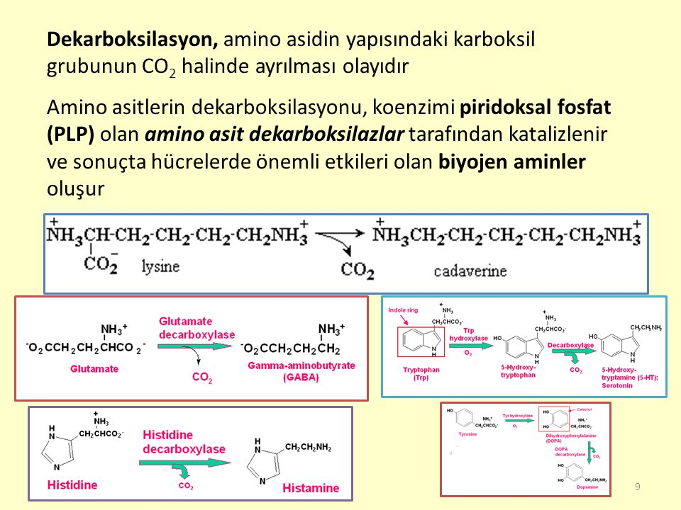 Dekarboksilasyon, amino asidin yapısındaki karboksil grubunun CO2 halinde ayrılması olayıdır