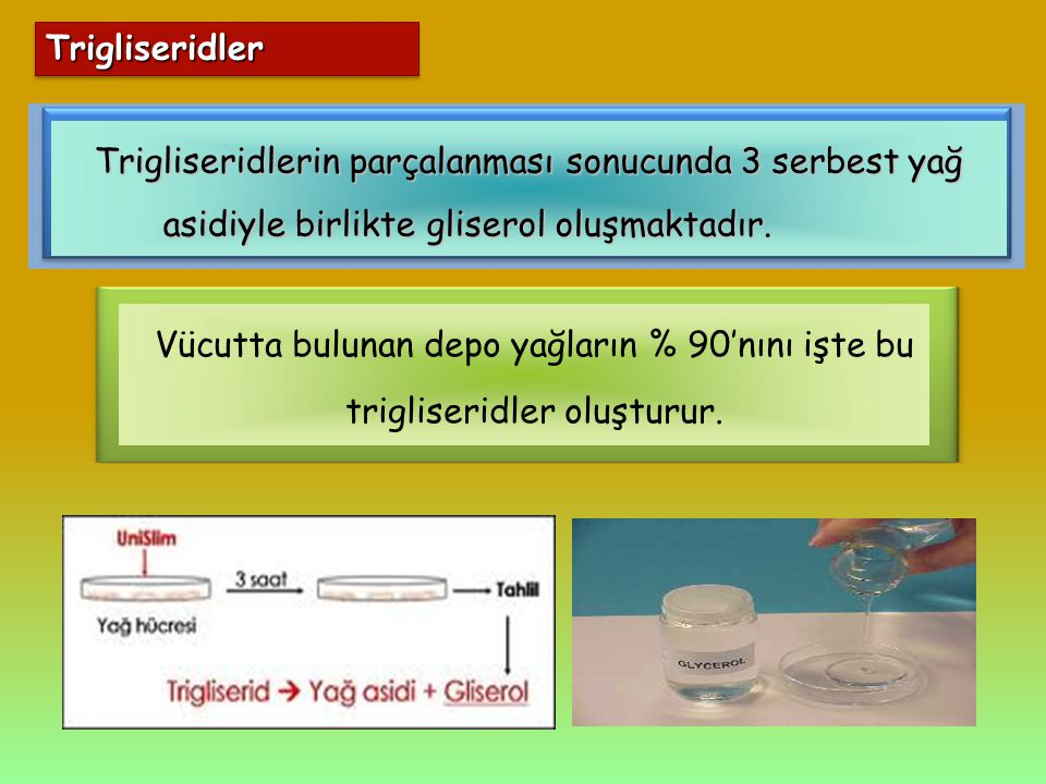 Trigliseridler Trigliseridlerin parçalanması sonucunda 3 serbest yağ asidiyle birlikte gliserol oluşmaktadır.