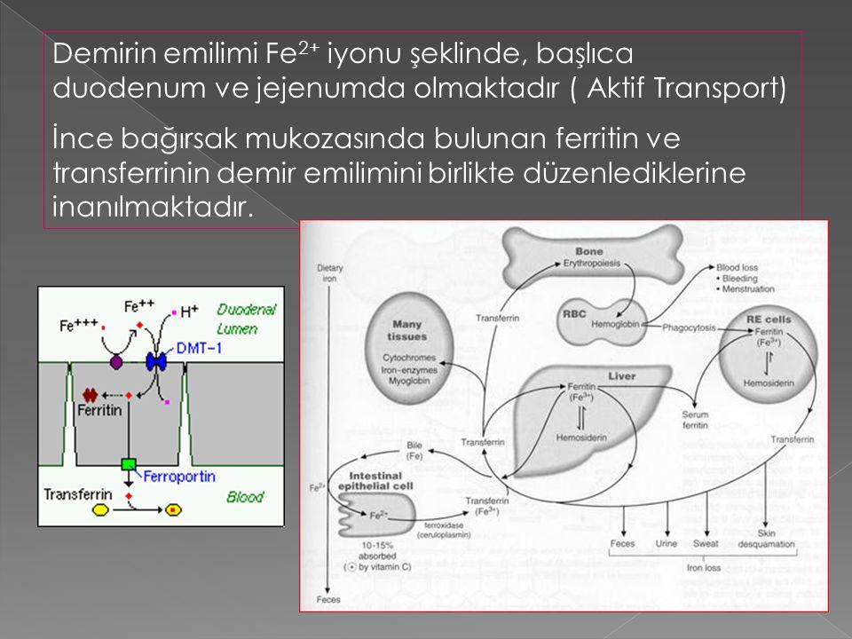 Demirin emilimi Fe2+ iyonu şeklinde, başlıca duodenum ve jejenumda olmaktadır ( Aktif Transport)